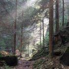 Naturpark Sächsische Schweiz